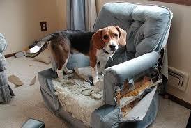 el-perro-destruye-objetos
