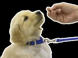 educacion-canina-desde-cachorros