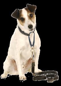 paseador-de-perros-castelldefels