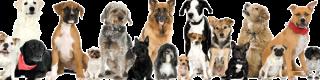 filosofia-de-trabajo-con-perros