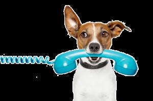 contacto-adiestradora-canina-en-barcelona