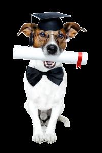 obediencia-y-educacion-basica-para-perros