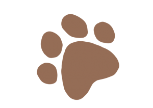 patte-chien
