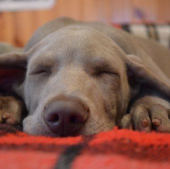 terapias naturales perros castelldefles barcelona